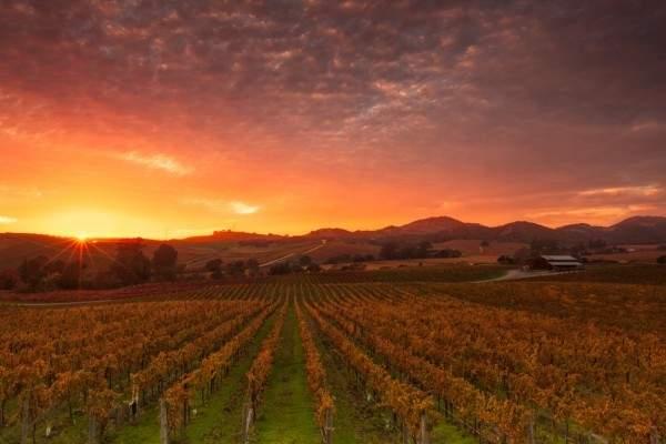 Farm field at dusk in Napa Valley, California