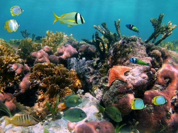 fishes around a coral reef in deep bright water