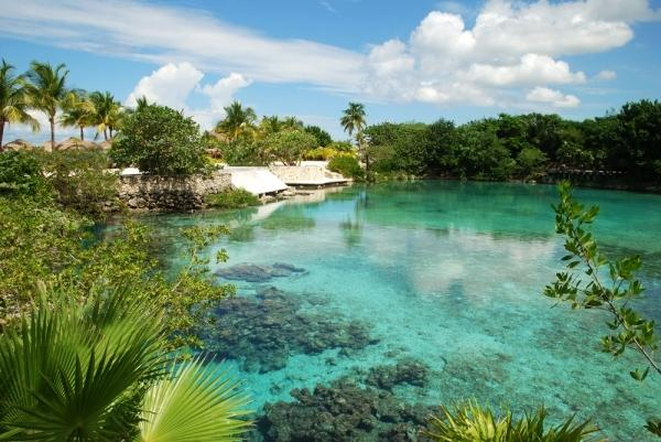 rainforest and clear water in Cozumel, Mexico island
