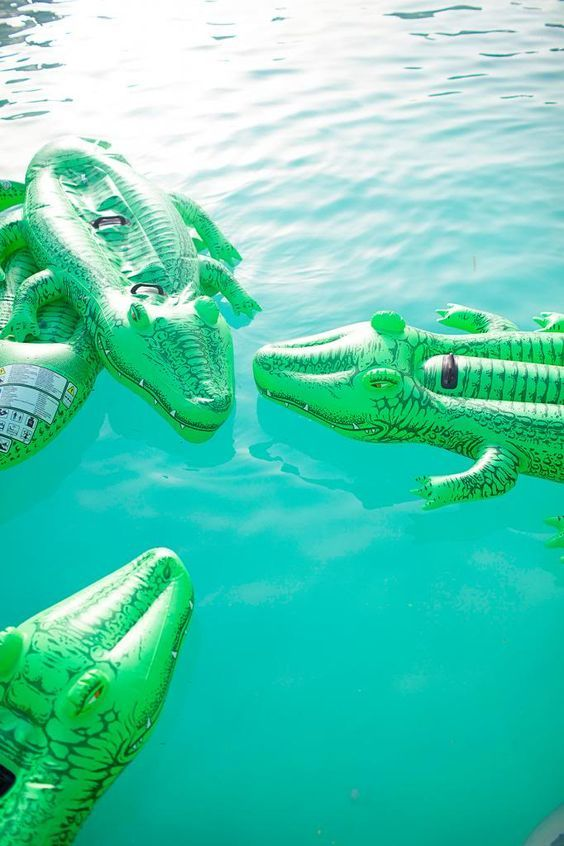Pool float alligators in group of 3 floating