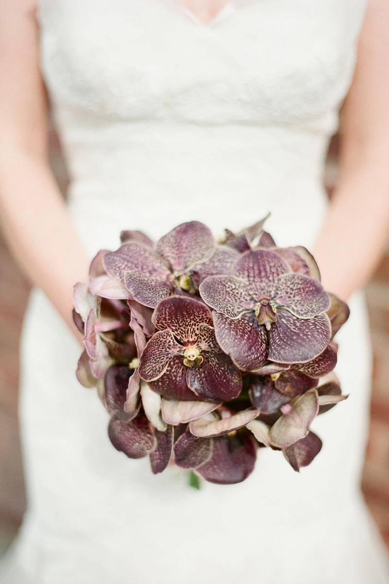 Chocolate Orchid Chic