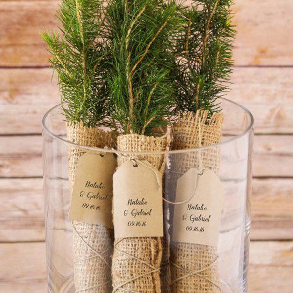 Evergreen tree seedling favor