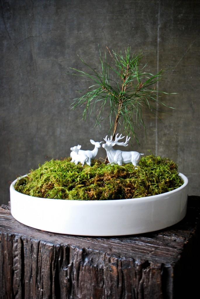 mossy winter terrarium