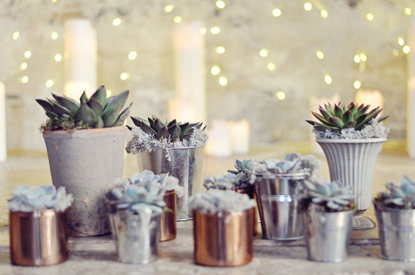 succulent wedding centerpieces