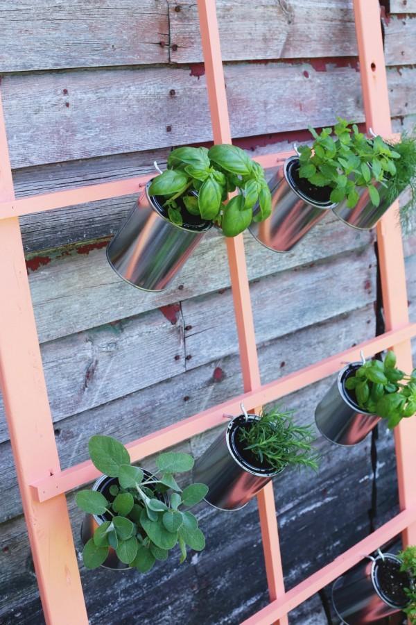 DIY herb display