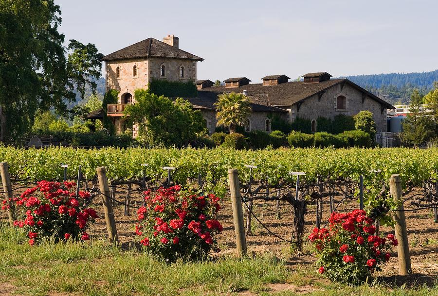wineryinnapavalley_248849.jpg